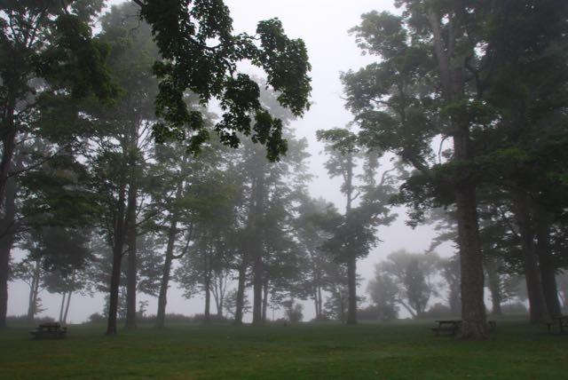 A foggy morning at Miller Park