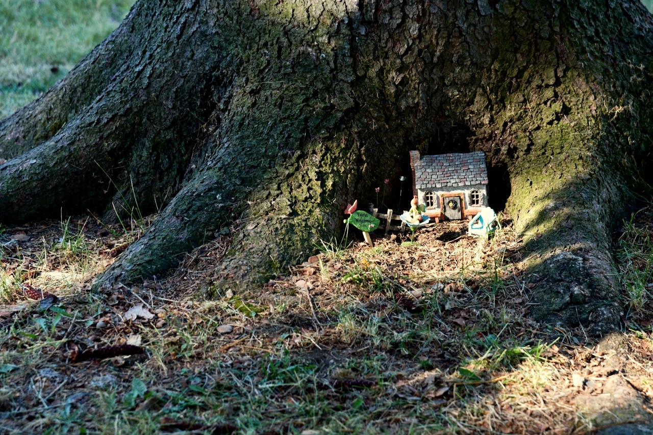 Tiny fairy houses can be found in many parks.