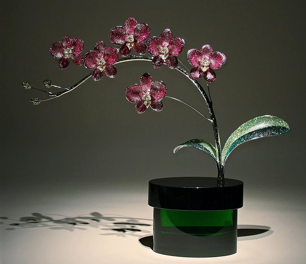 Fuchasia Orchid