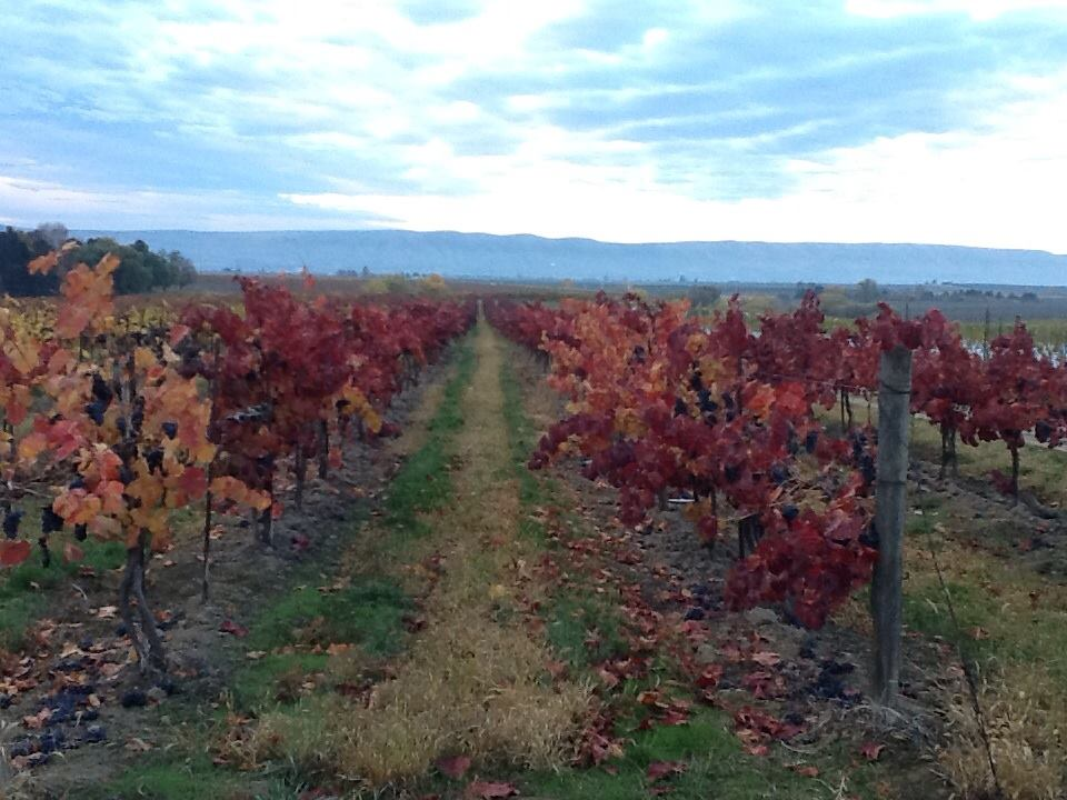 Fall on the Vines
