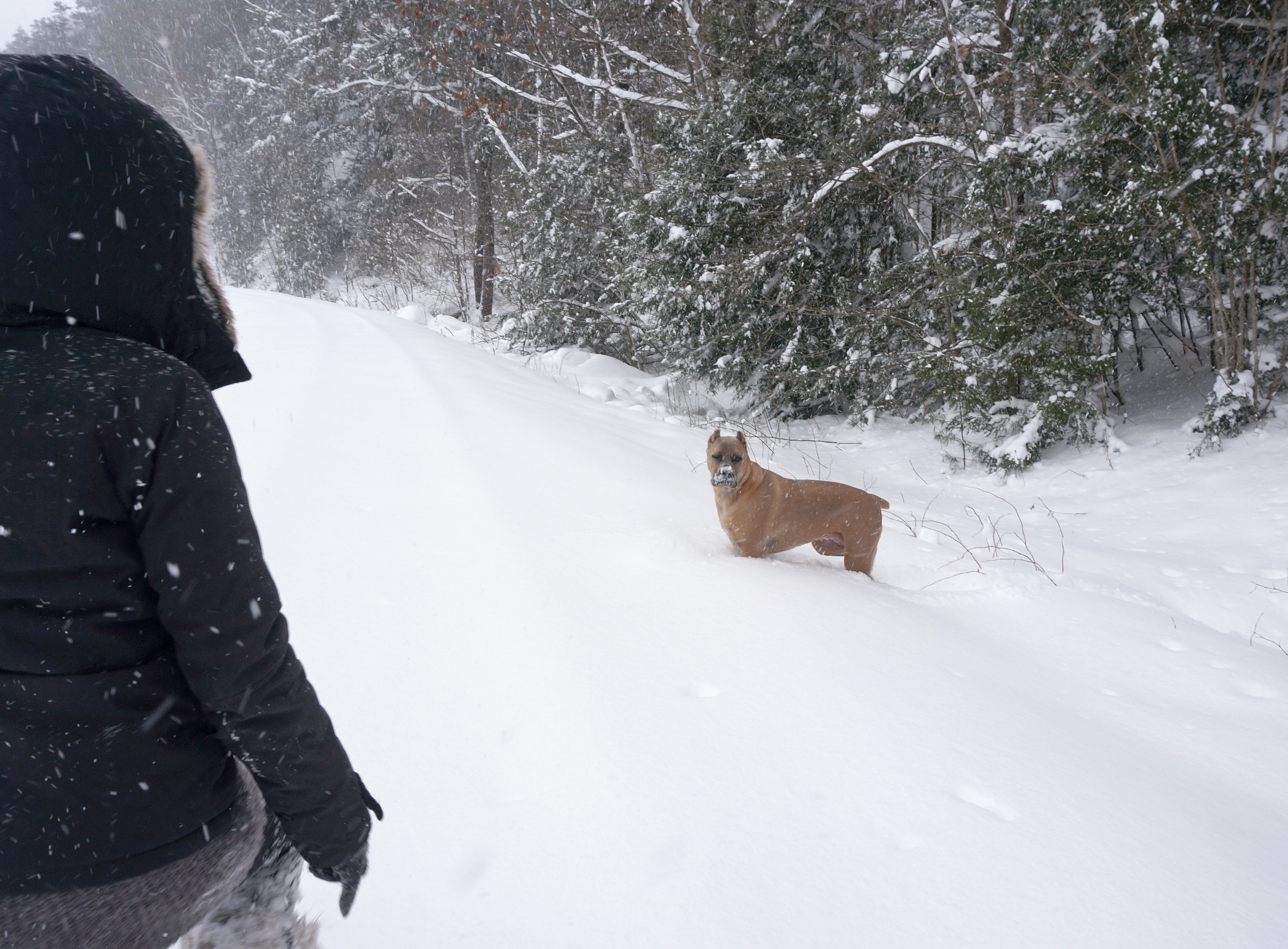 My dog and I in the snow