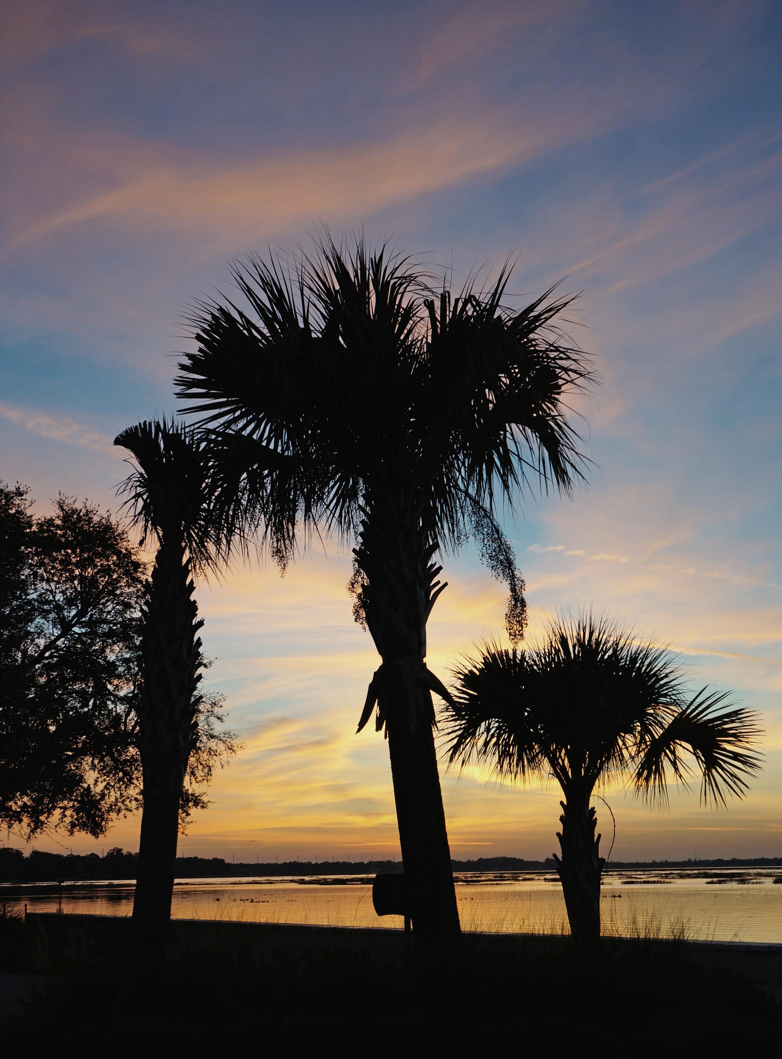 Shadowed Palms