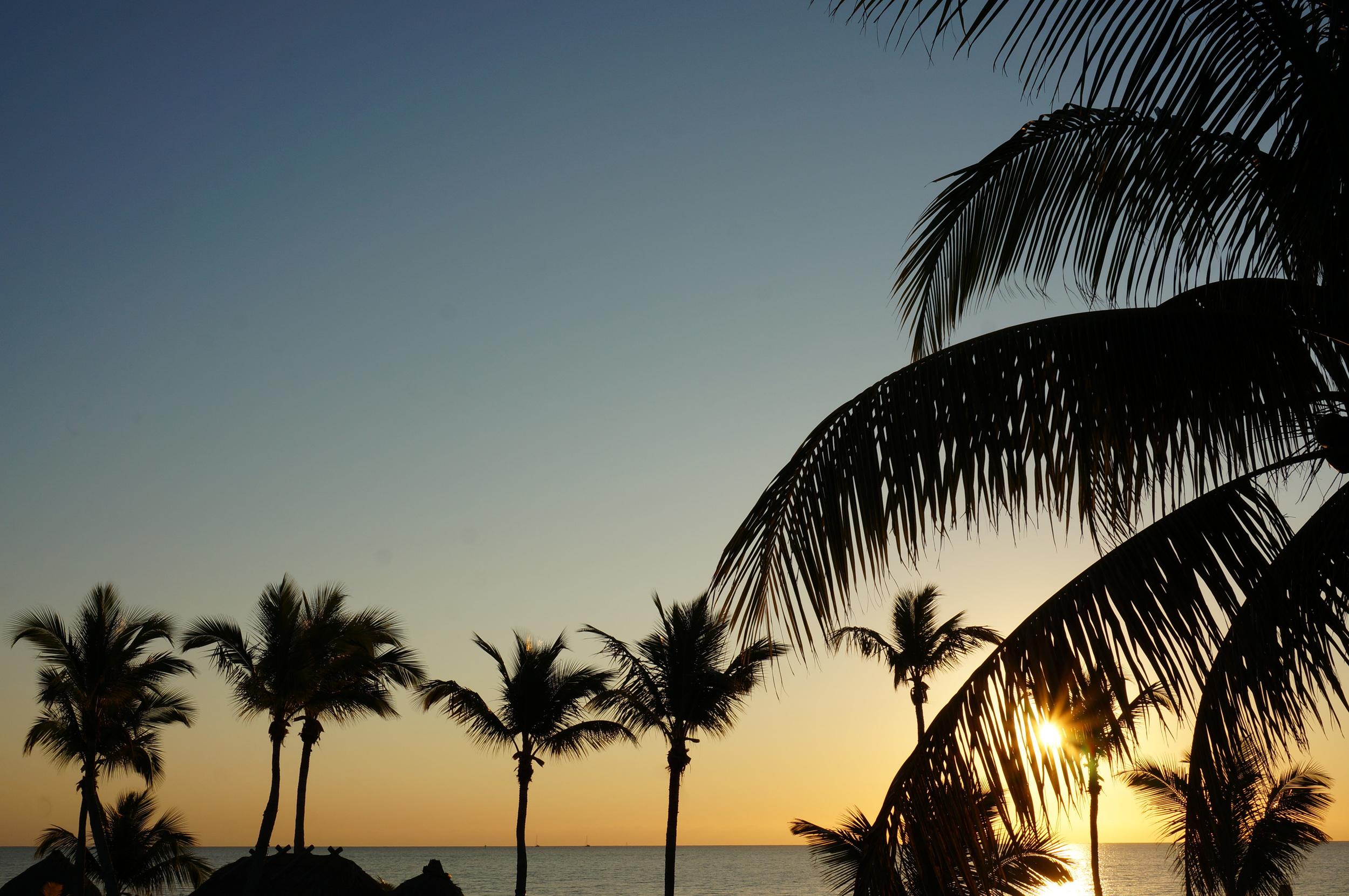 Sunrise and palm trees