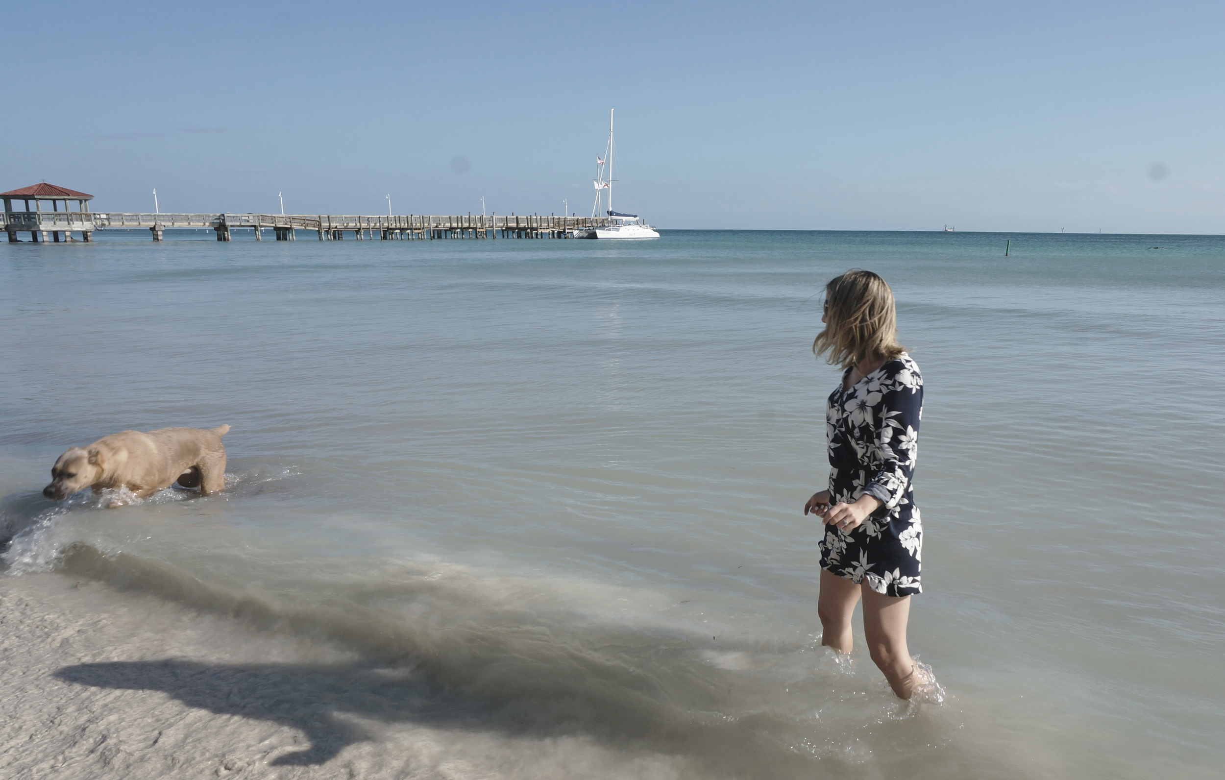 Key West Dog Beach