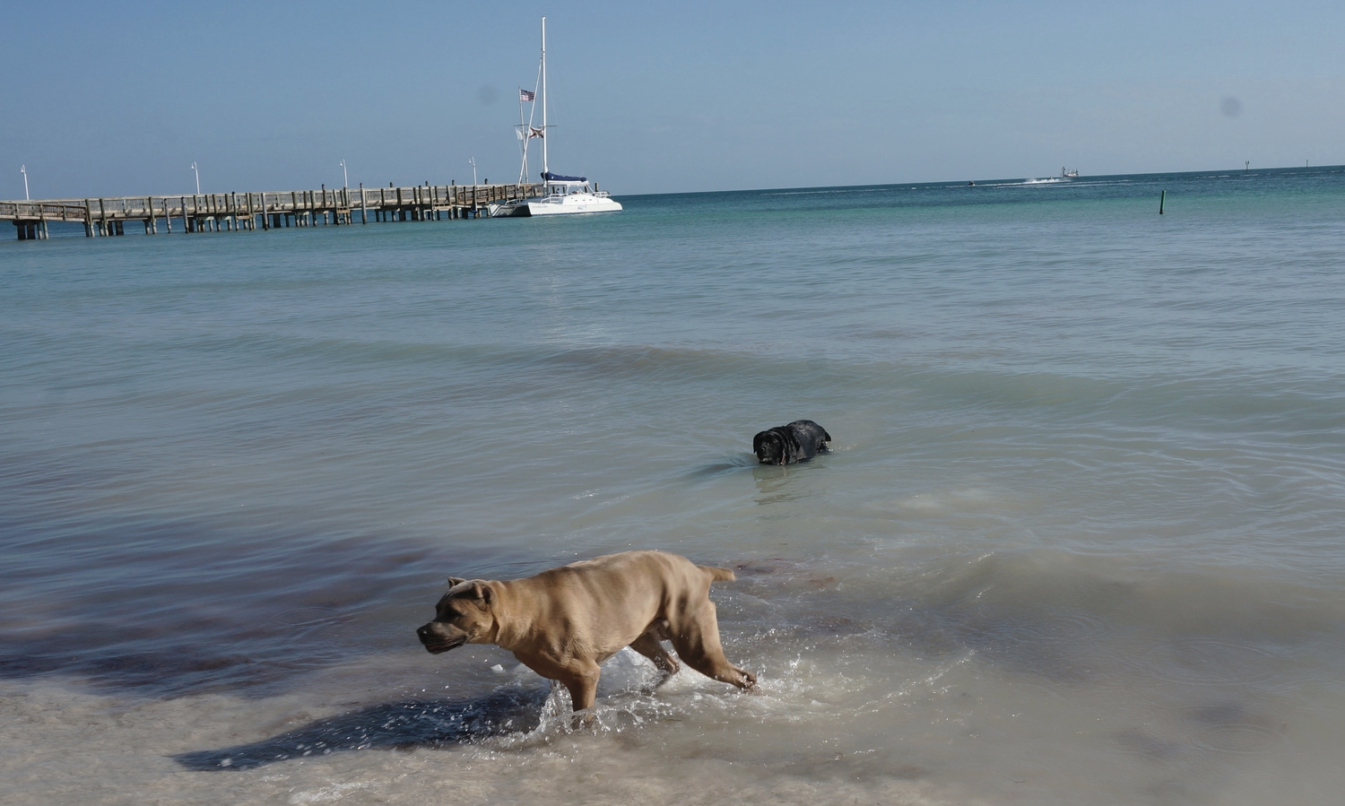 Key West Dog Beach