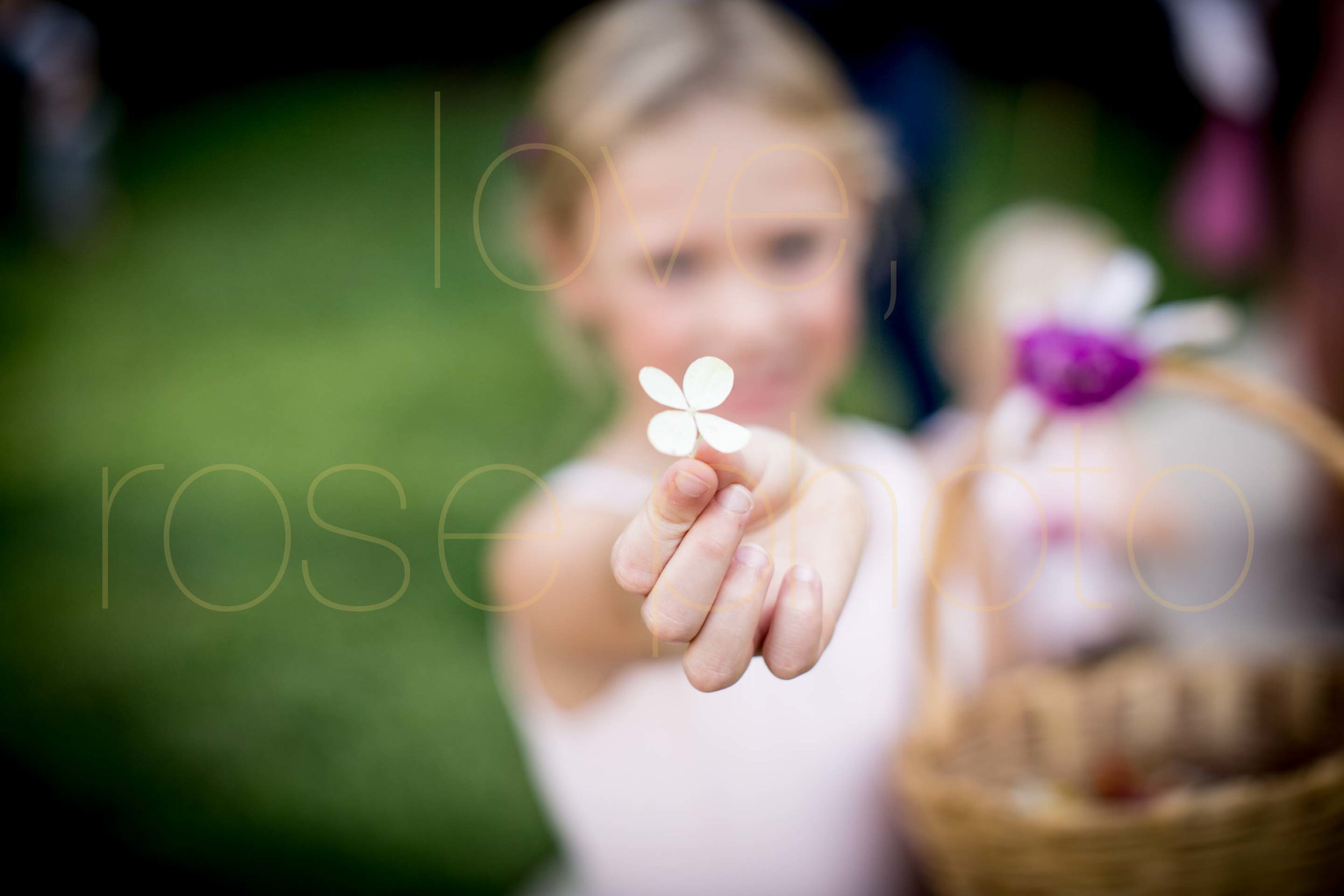 Rose Photo Asheville Wedding Photographer Nasheville Weddings Charleston Bride Chicago photojournalist weddings -34.jpg