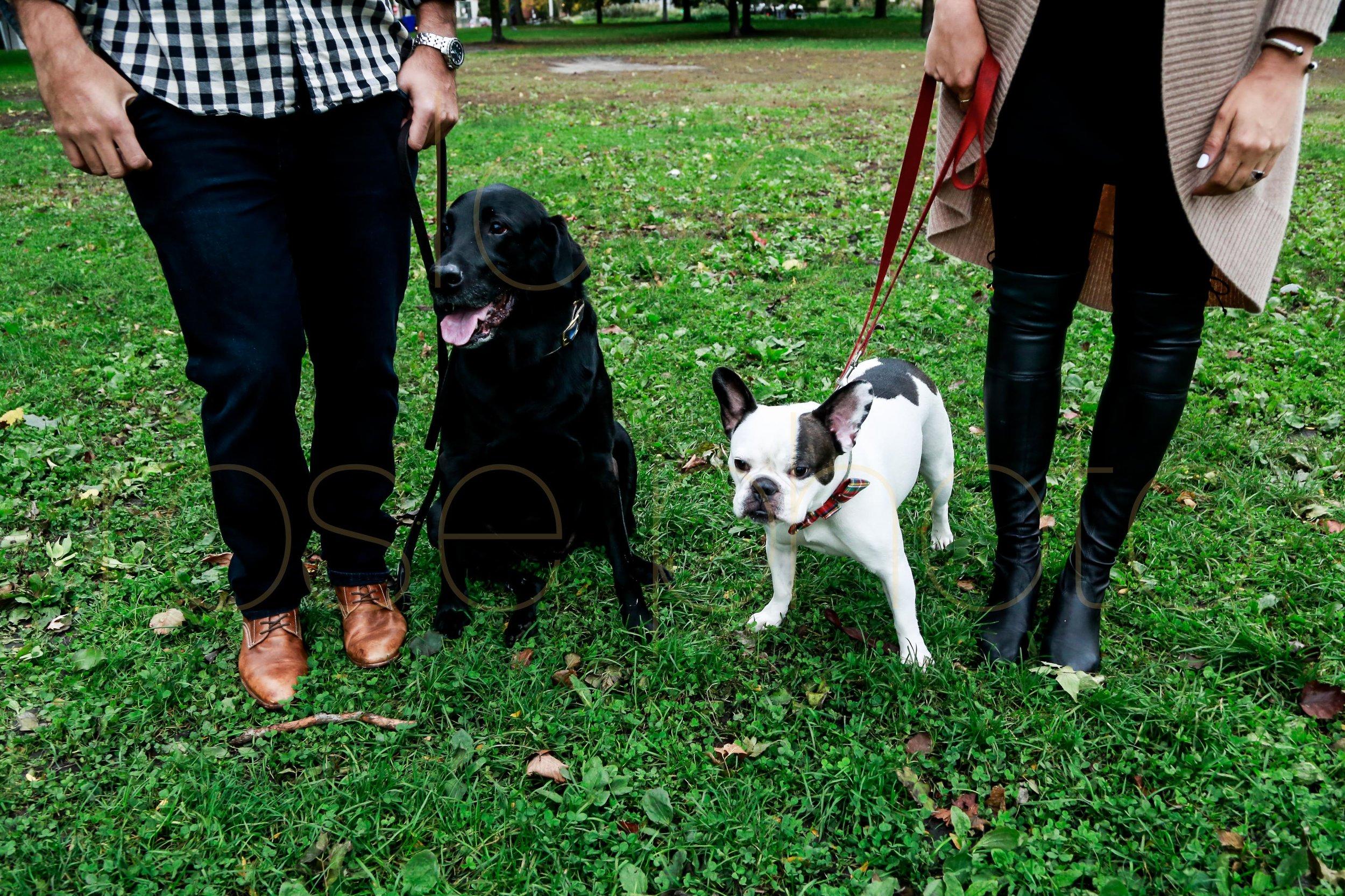 Sara + Milos Rose Photo Custom Engagment shoot blog best wedding photographer chicago-11.jpg