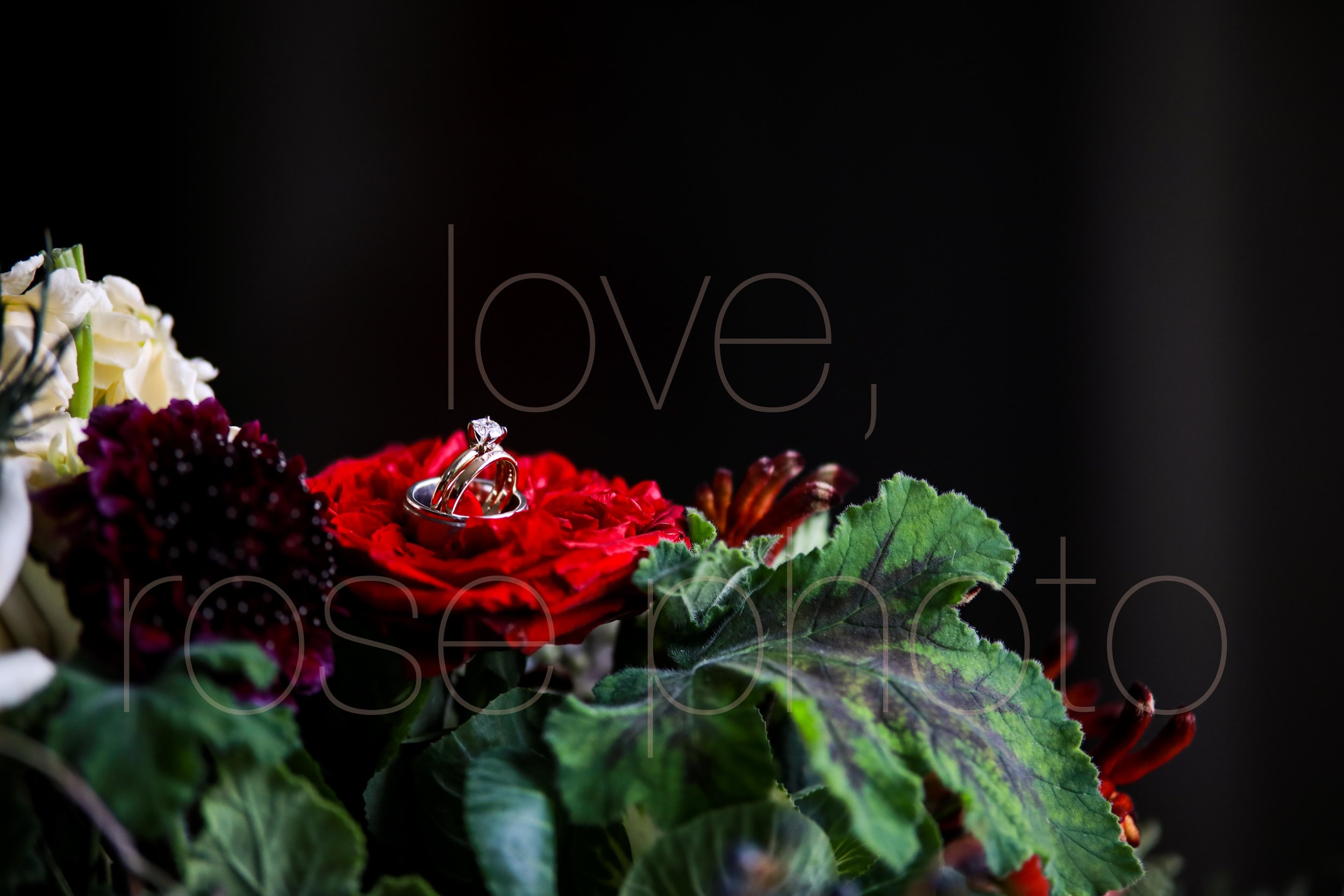 best wedding photographer rose photo asheville chicago new york photo collective-5.jpg