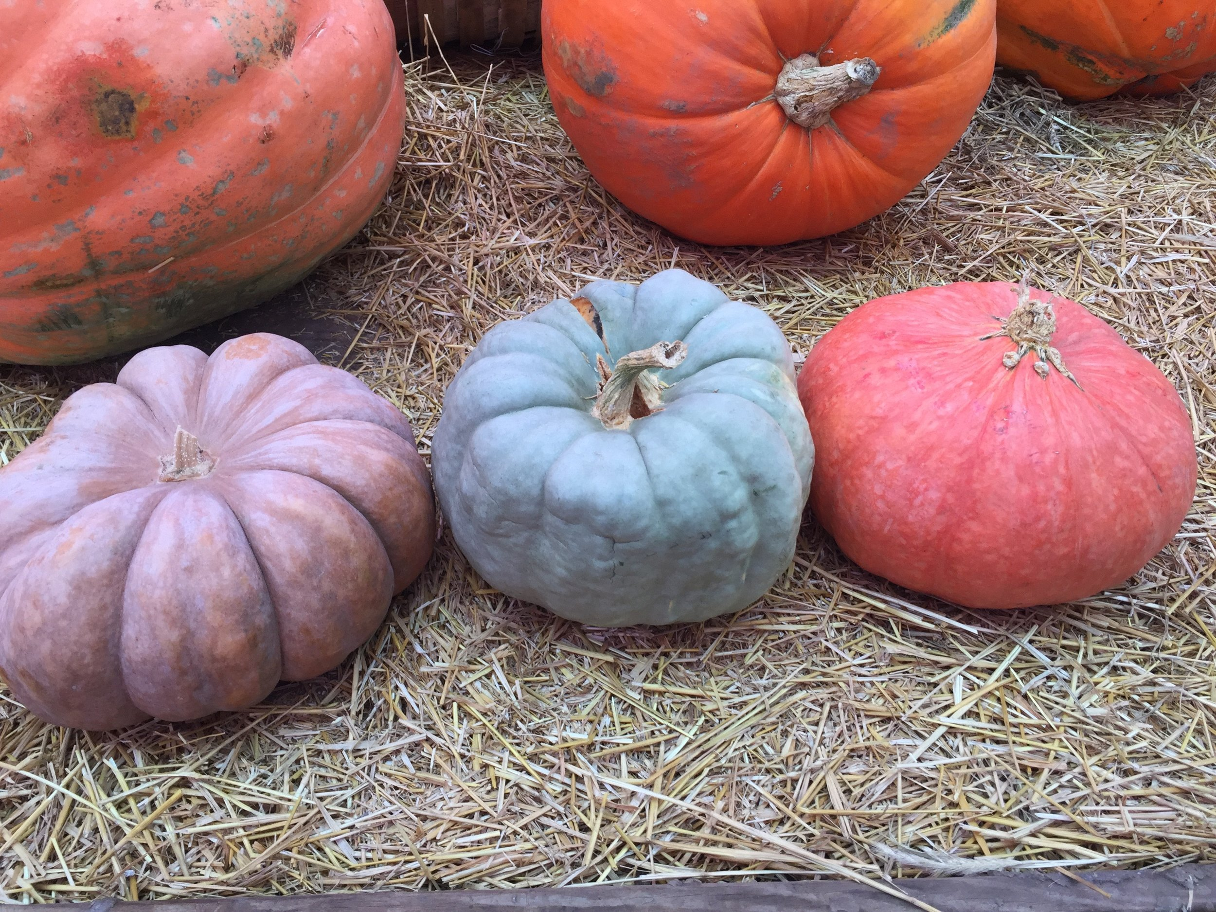 Heirloom Pumpkin Vessels