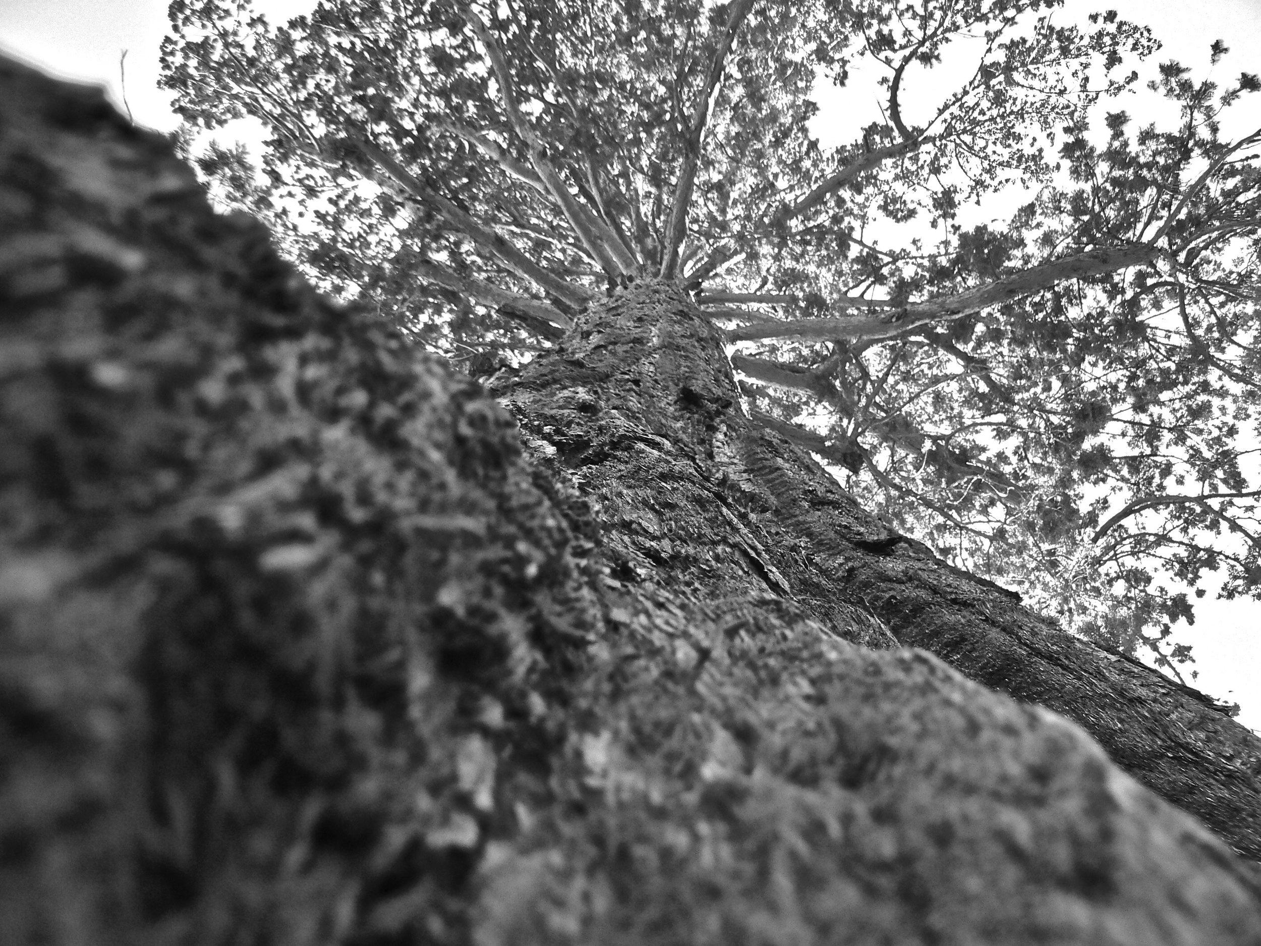 Epic Tree 3.jpg