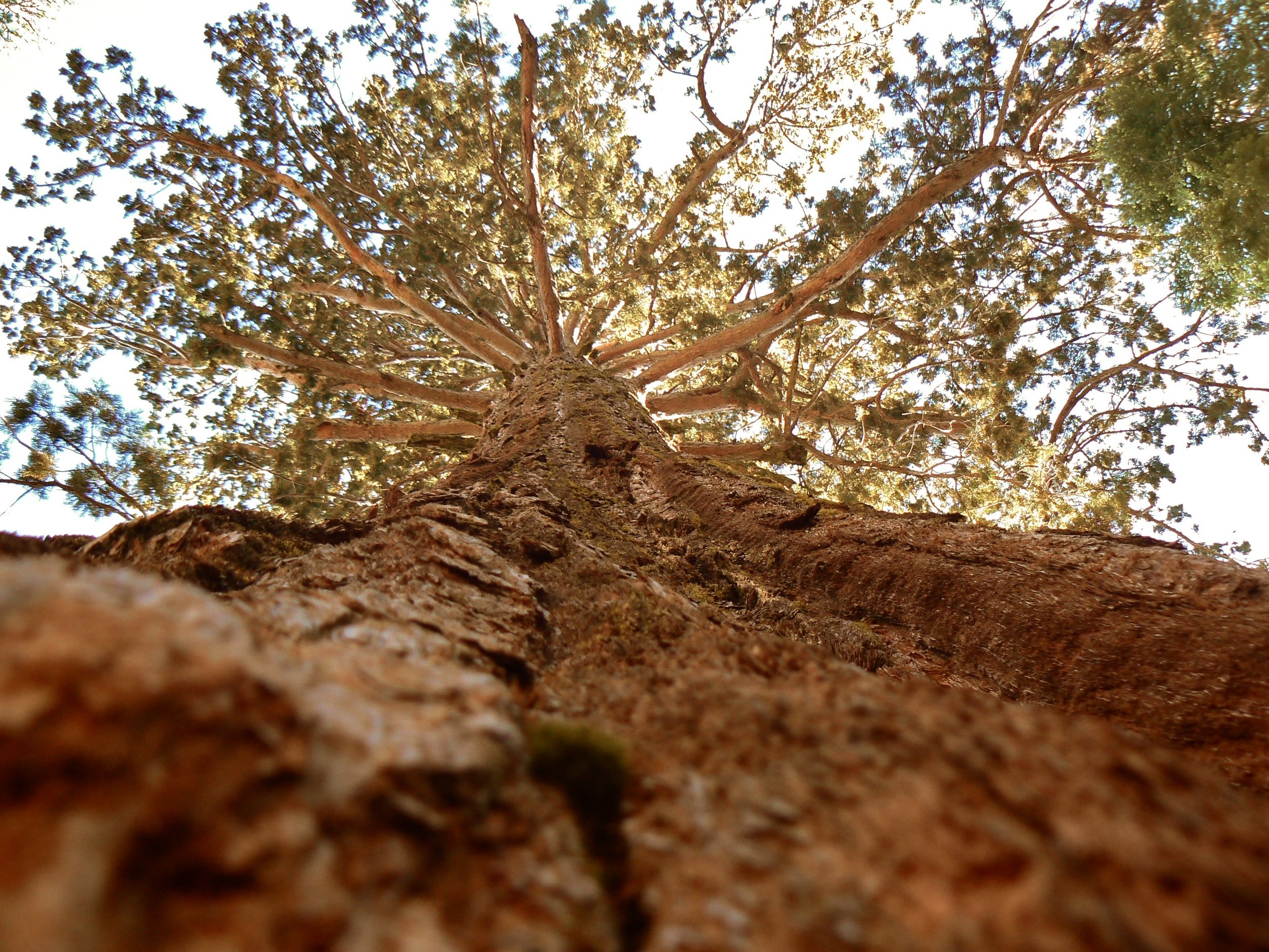 Epic Tree 2.jpg