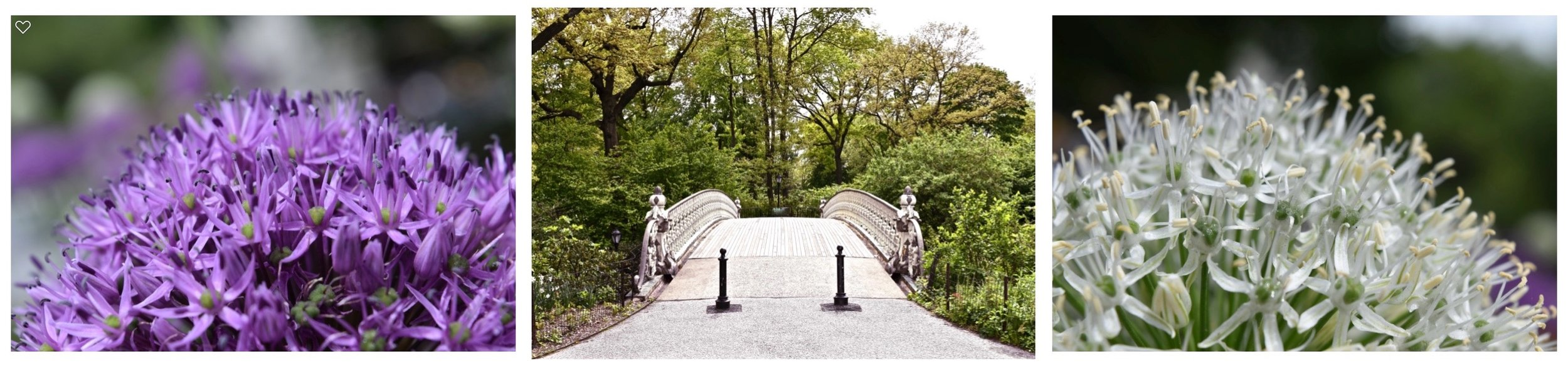 "Central Park Triptych:  ""Floral Entry"""