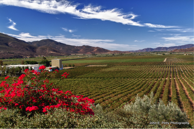 L.A. Cetto Vineyards in Guadalupe Valley