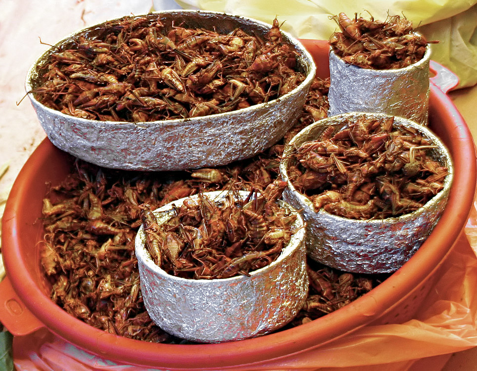 Chapulines (Photo Courtesy of Wikimedia)
