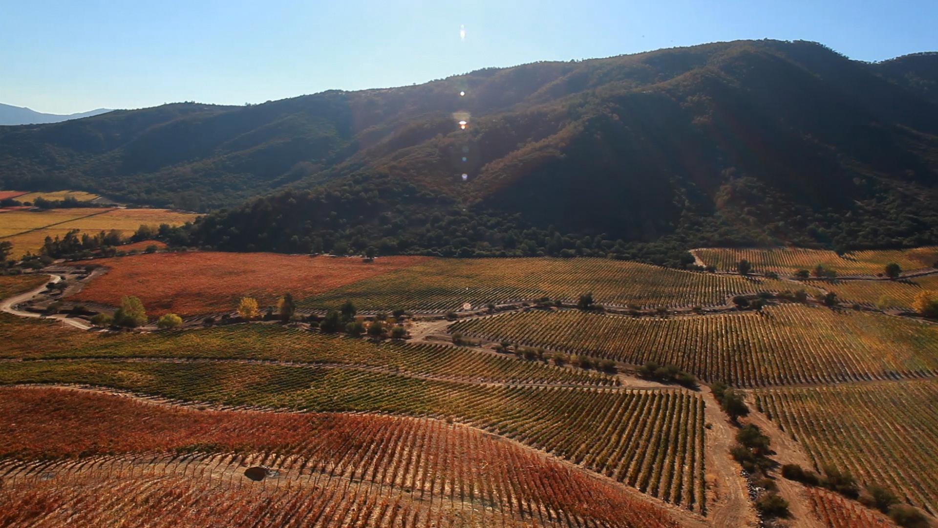 Neyen's dry-farmed vineyards. Apalta Chile.
