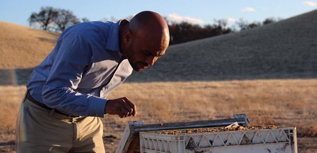 Ayele Solomon inspecting a hive. Photo courtesy of University of California at Berkeley.