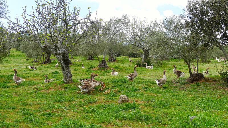 "Sousa's ""foie farm."" Photo courtesy of Lauren Frayer, of NPR."