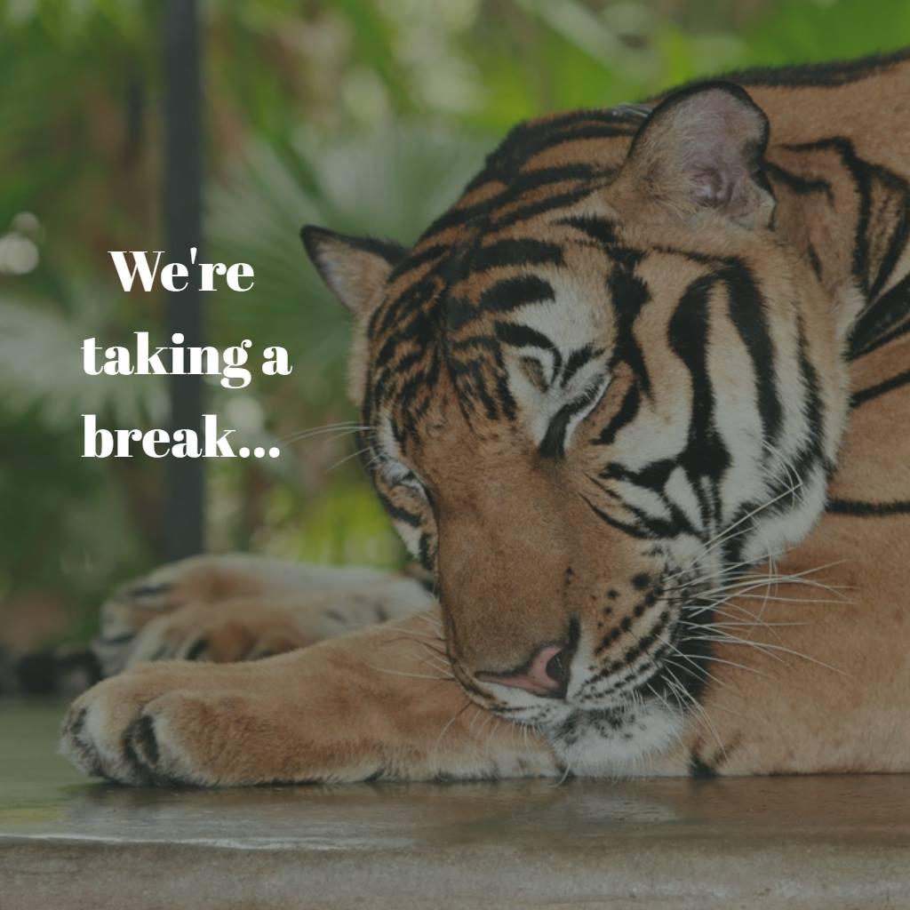 Tiger Beat Break.jpg