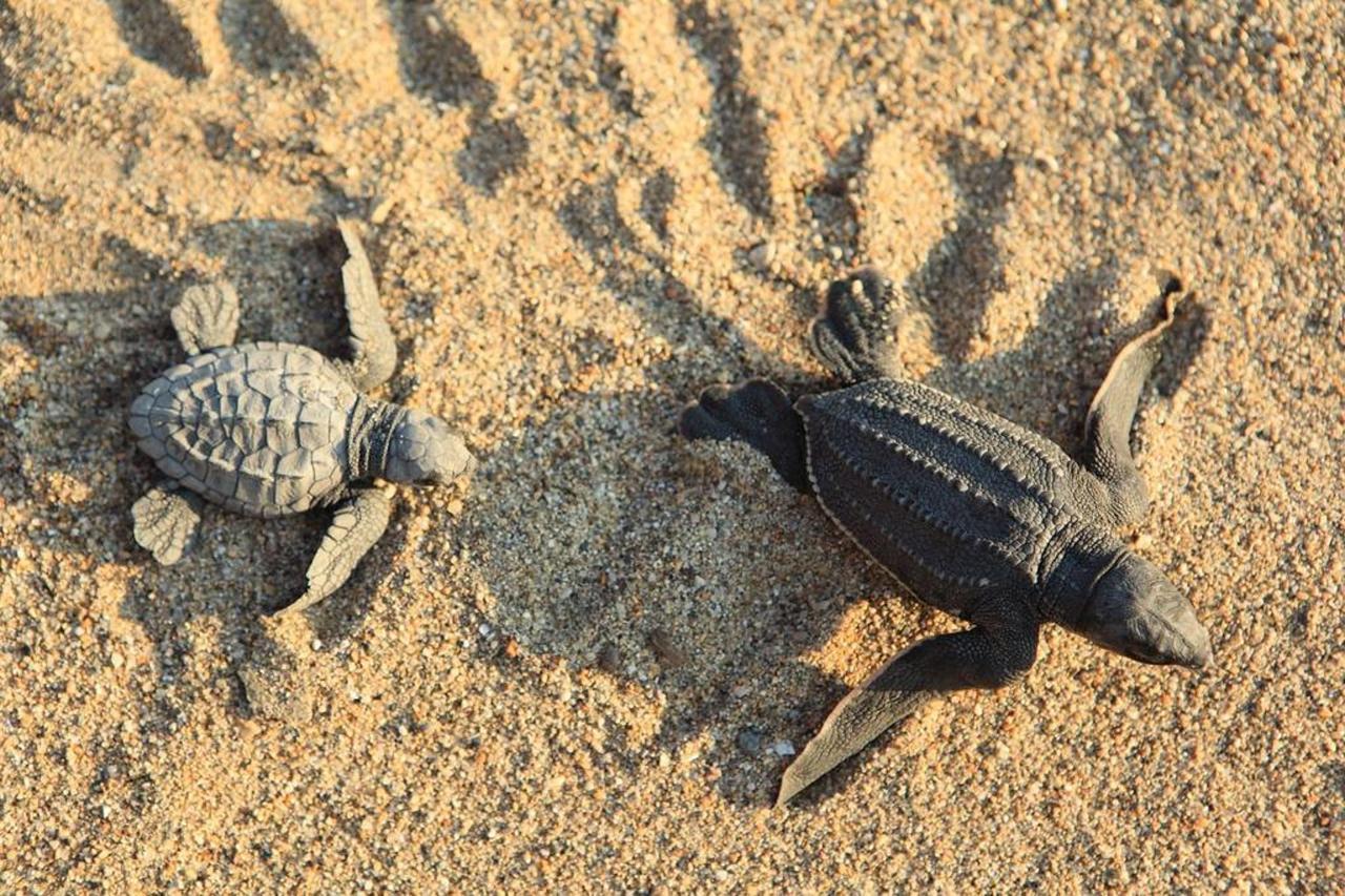 PlayaViva-turtles.jpg