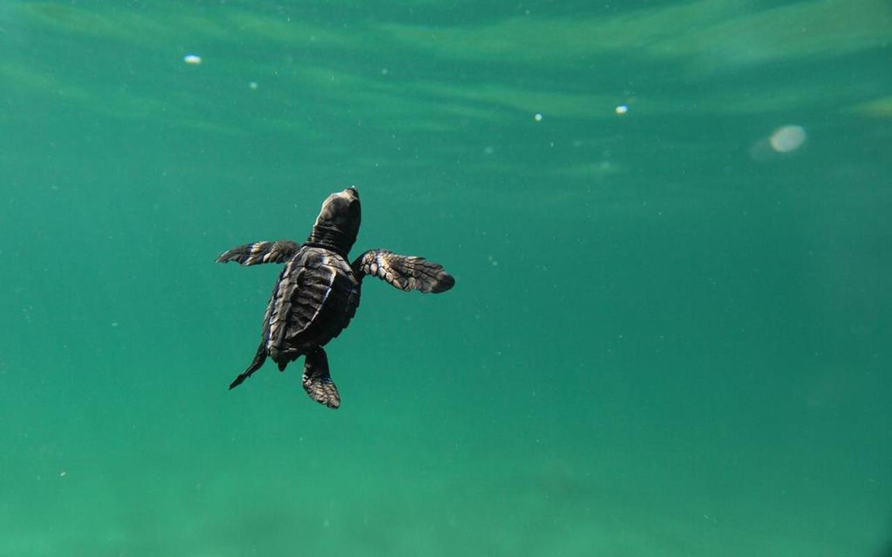 PlayaViva-Turtleswater.jpg