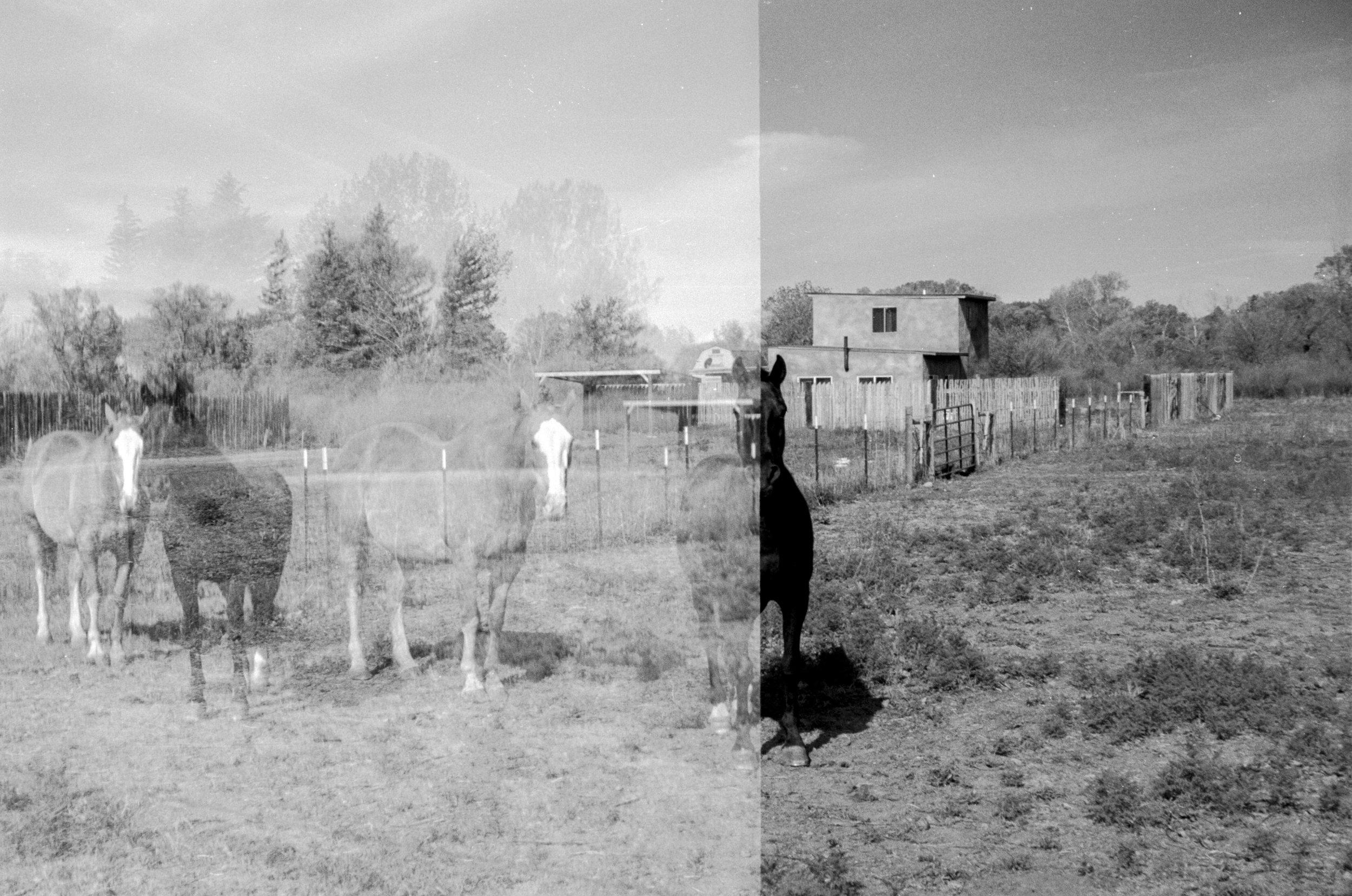 Hello Horses | Taos, New Mexico 2016
