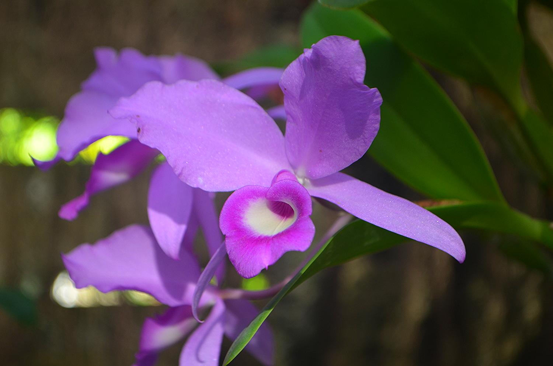 Orchid Garden. Soroa, Cuba
