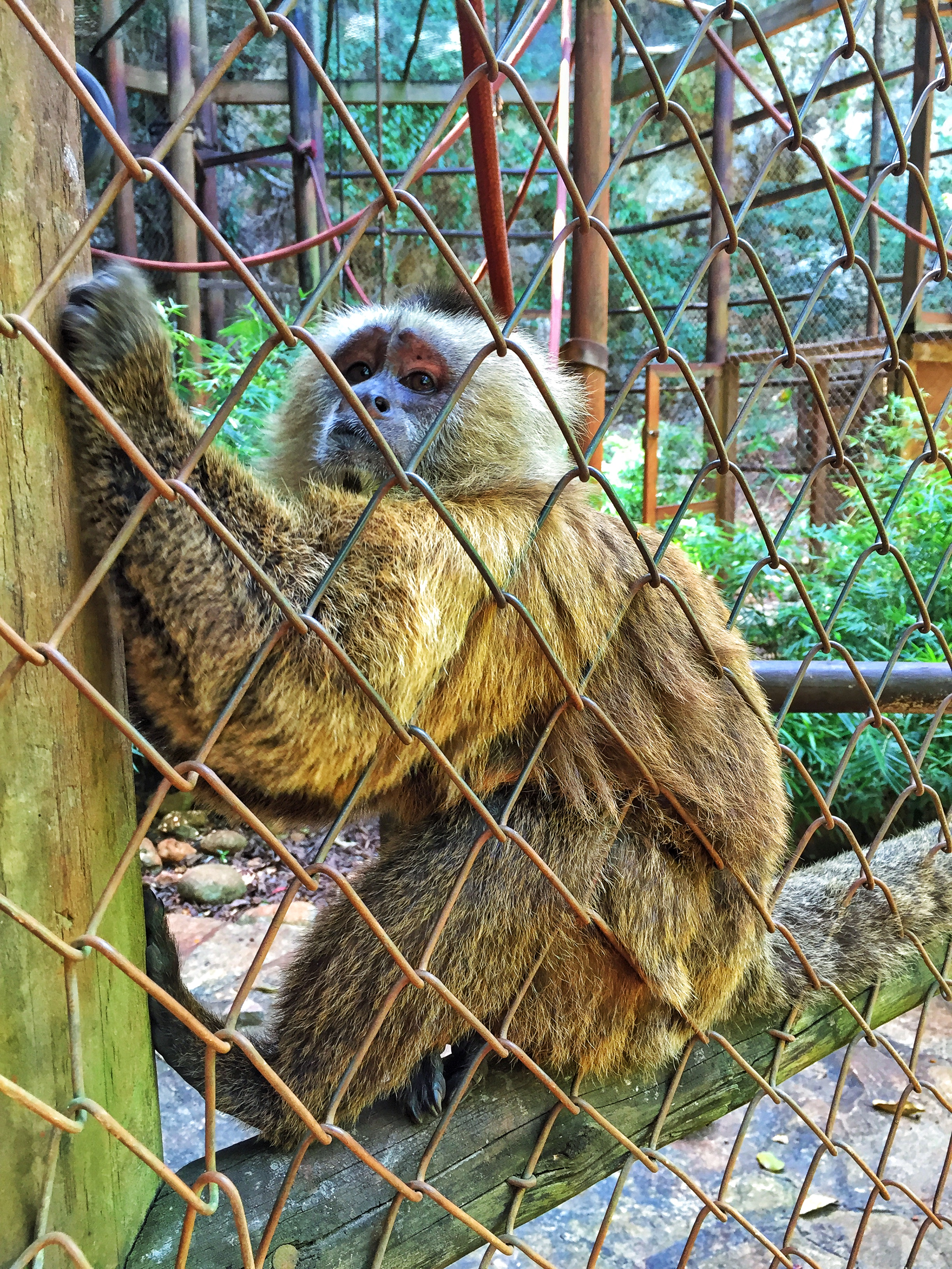 How Monkeying Around in the Dominican Republic is Saving