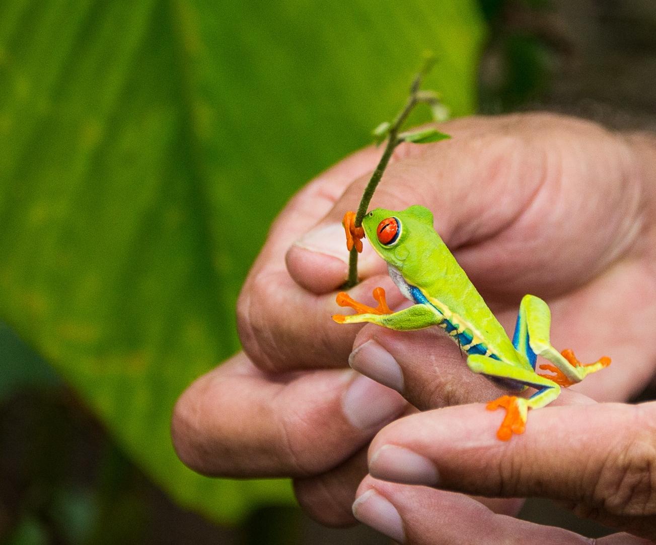 Frog (Photo credit Charlie Ertel).jpg