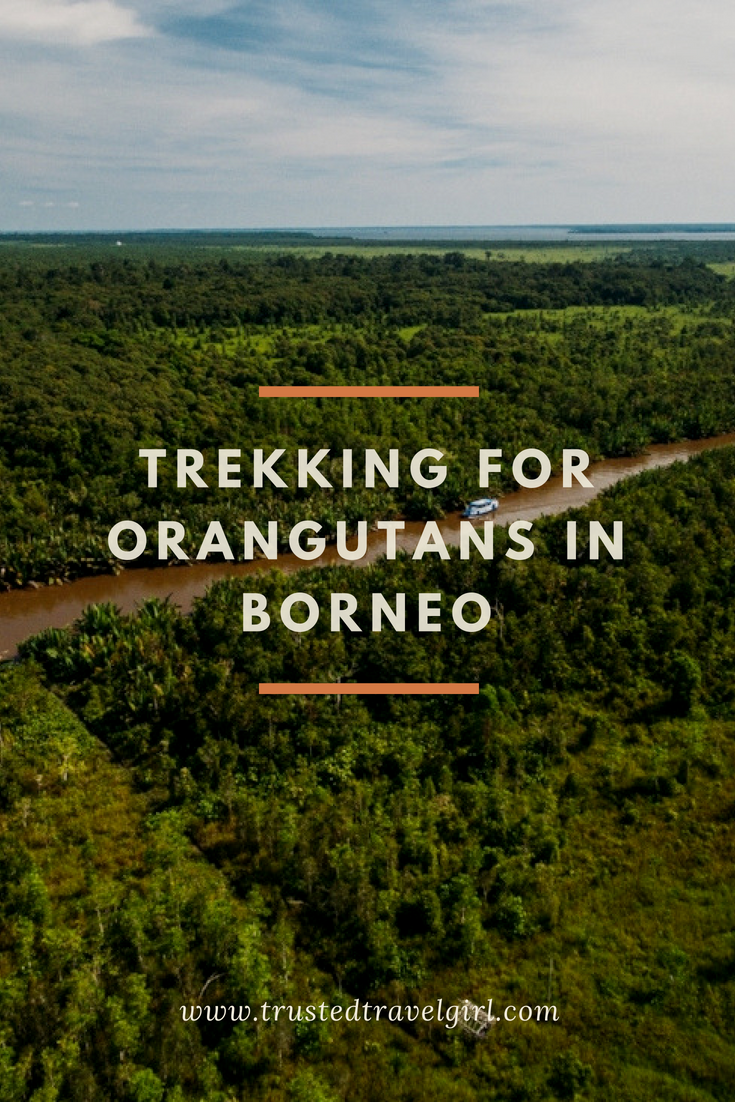 If you're traveling to Indonesia, you have to add Borneo Indonesia to your travel itinerary. Though the beaches of Bali are beautiful, the true experience of Thailand is found deep in the Borneo jungle. Come see why you have to add trekking for orangutans to your list of things to do in Thailand and why it was such an incredible experience. Don't forget to save this to your Thailand board so you can find it before your next trip. #thailand #borneo #wildlife