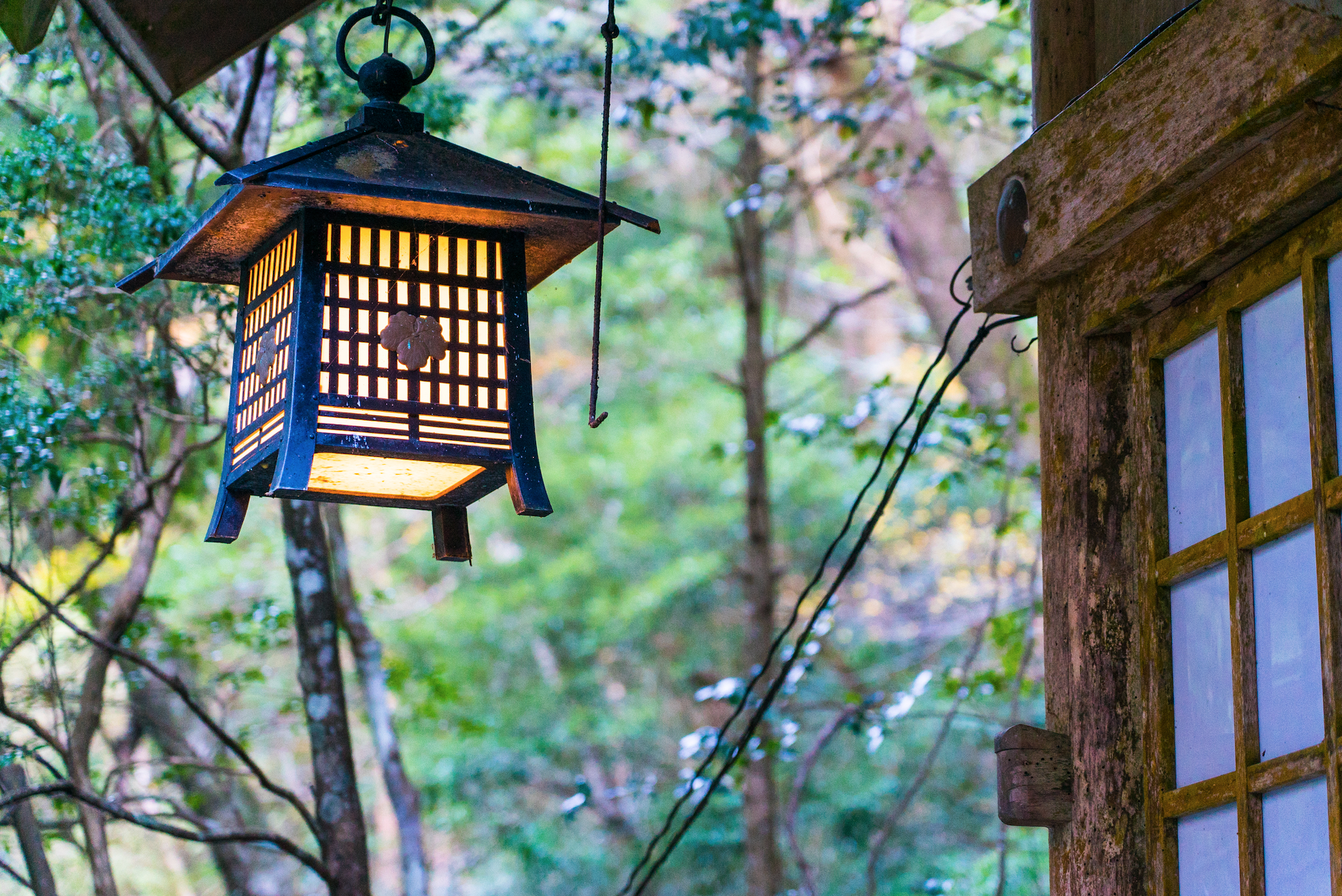 Forest Therapy and Beer Onsen in Misugi Japan
