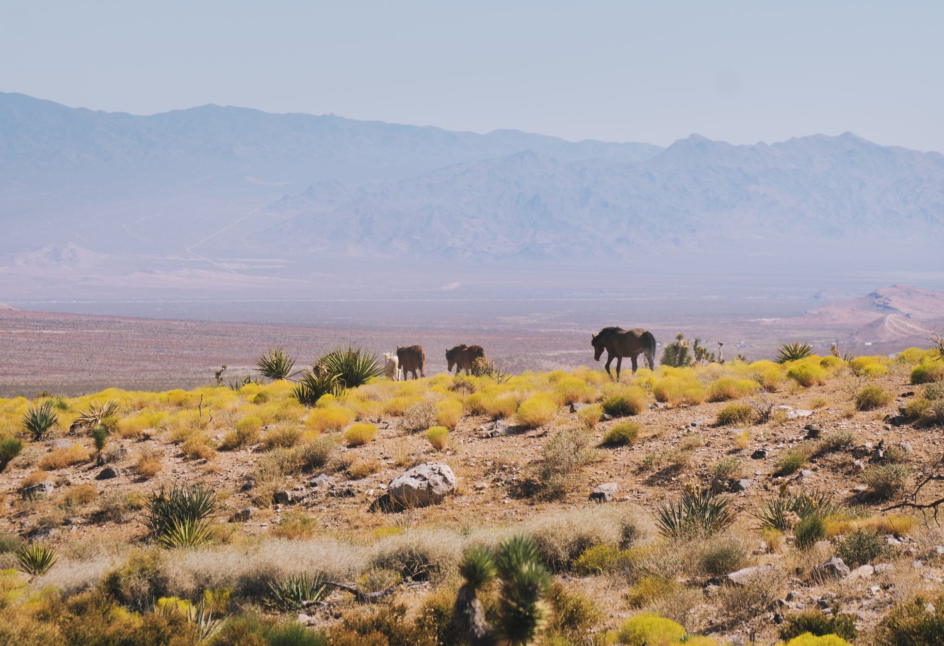 On this Las Vegas day trip, you can ride ATV's and see wild horses