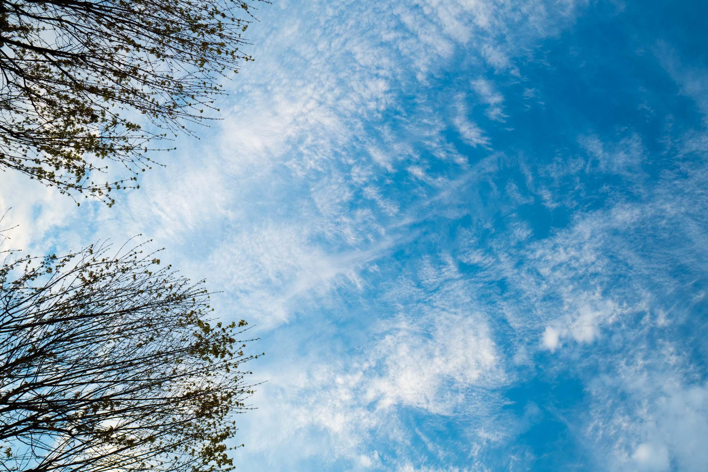 Nature_6.jpg