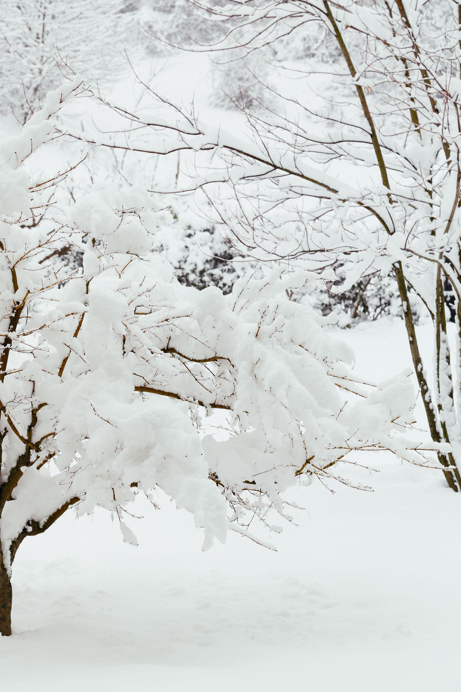 Nature_15.jpg