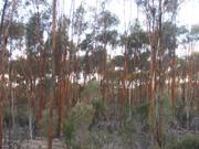 trees-poustinia.jpg