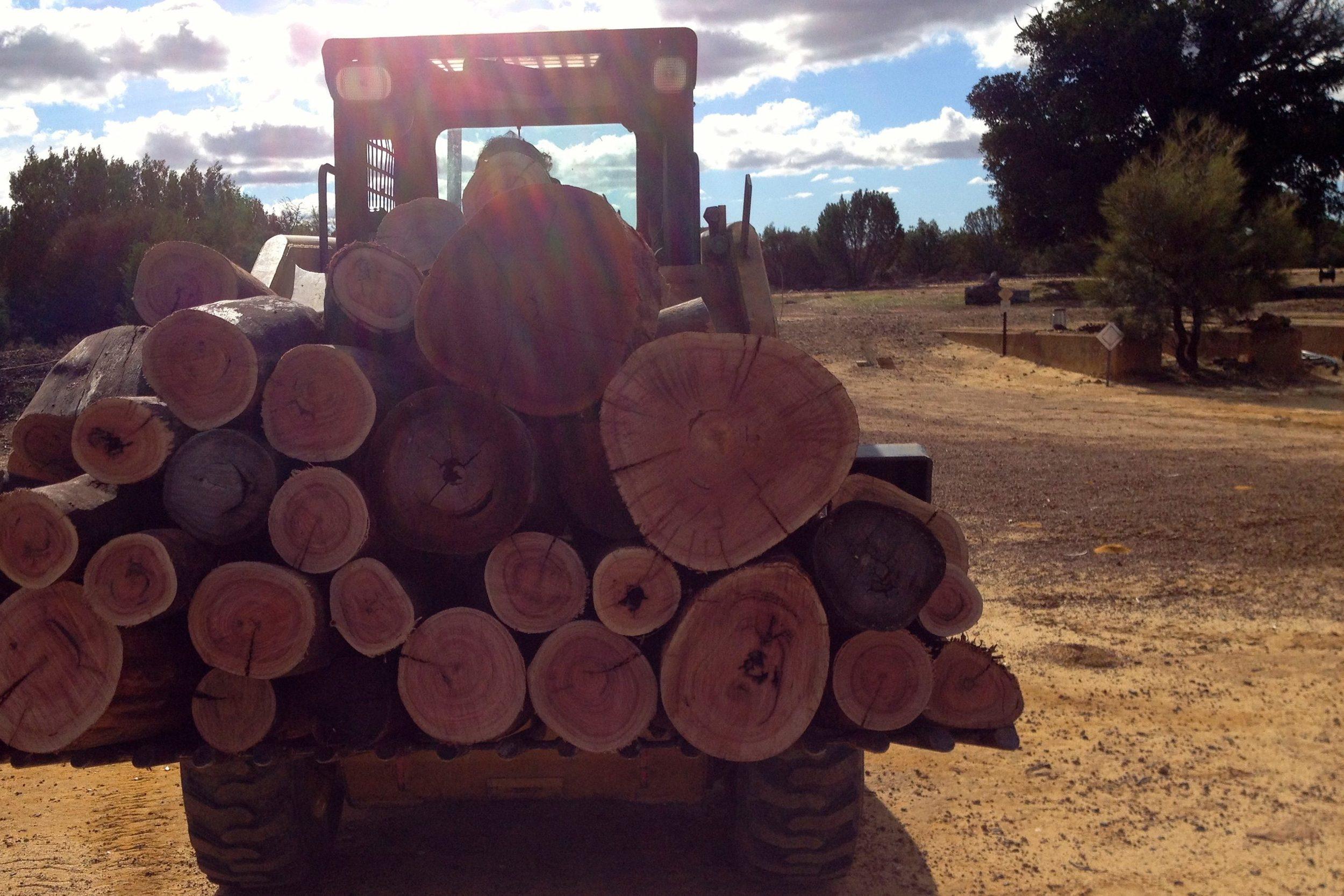 getting firewood1.jpg