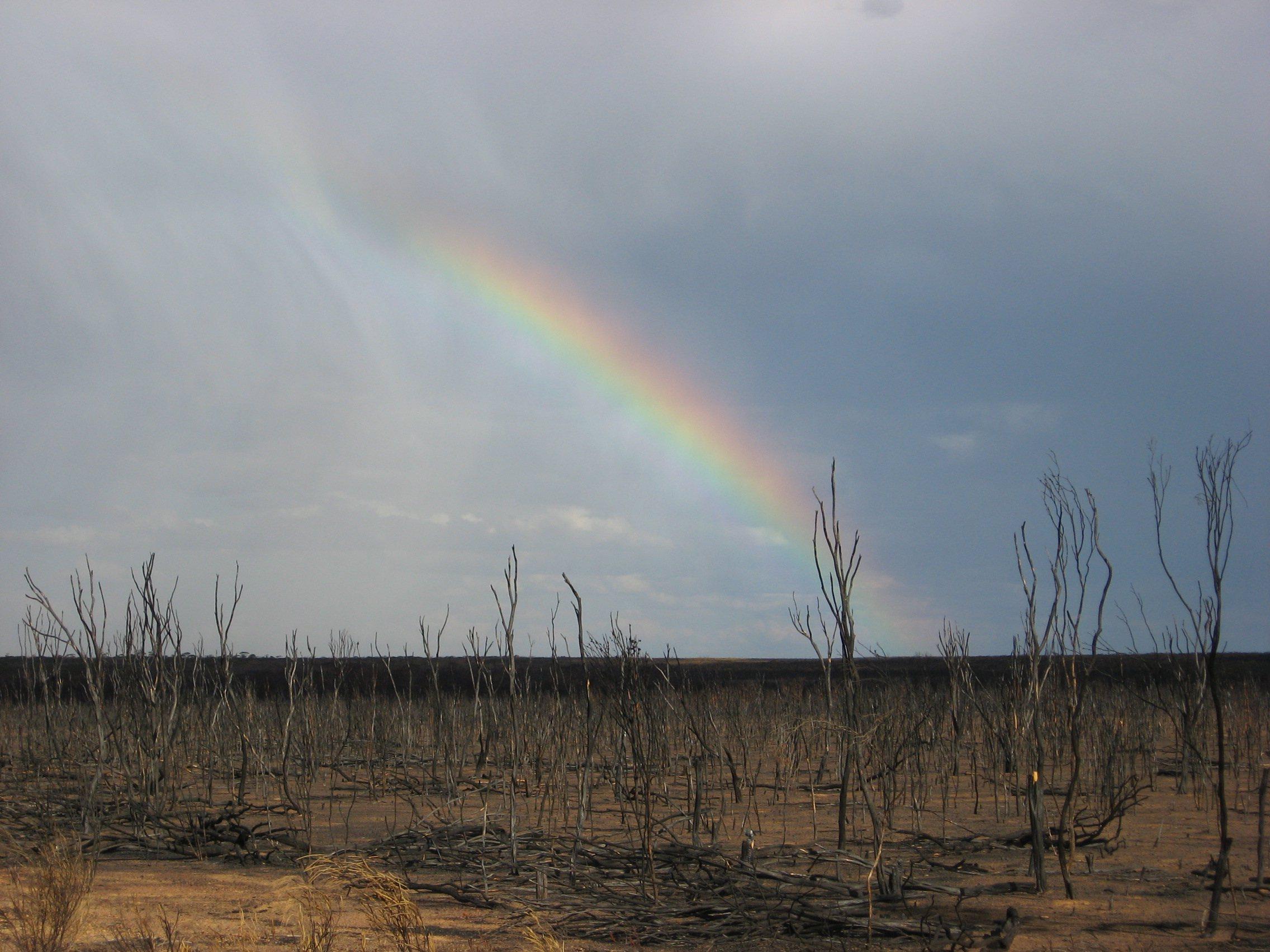 after the fire rainbow1.jpg