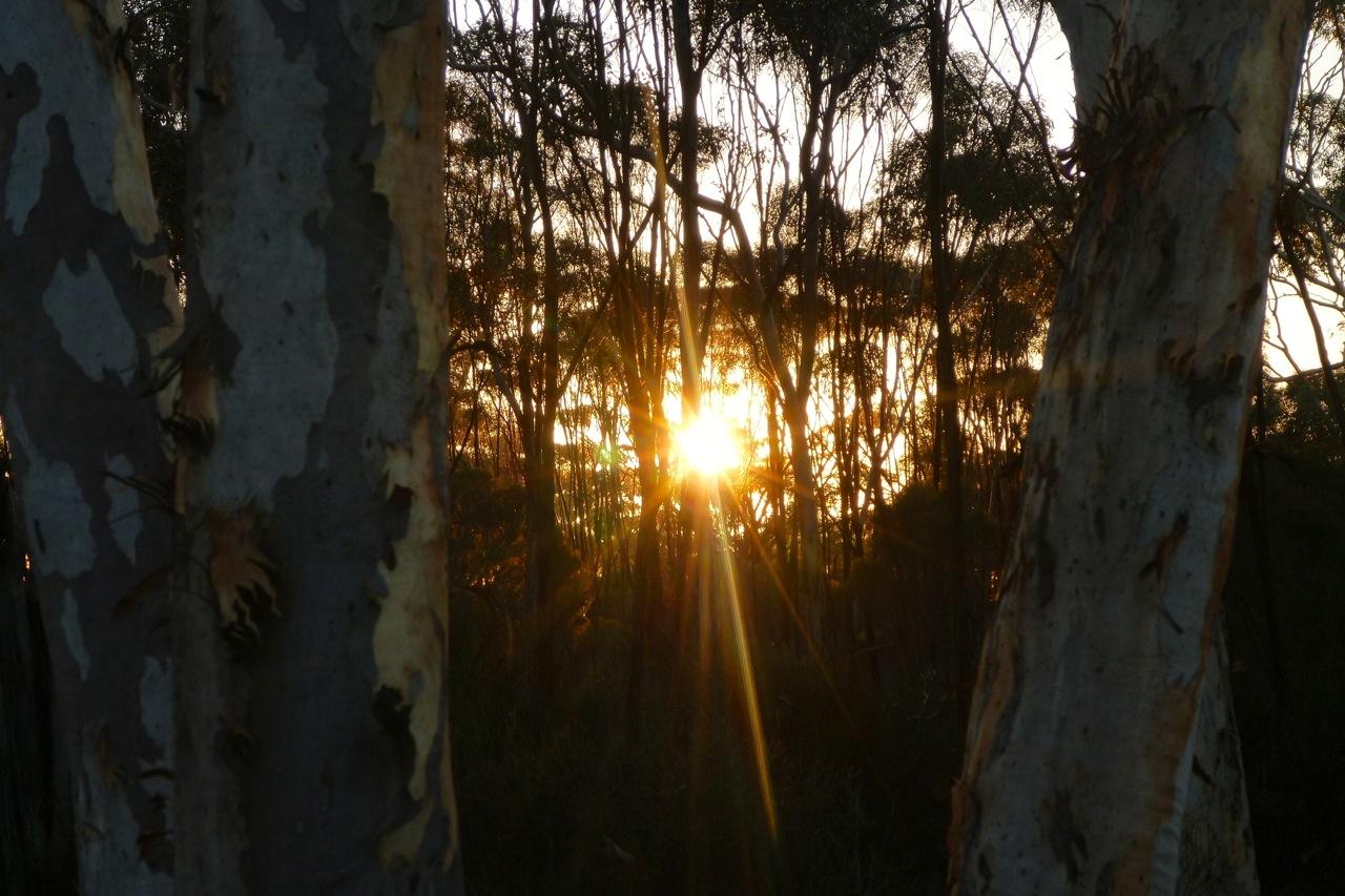 sunrise between tree trunk.jpg