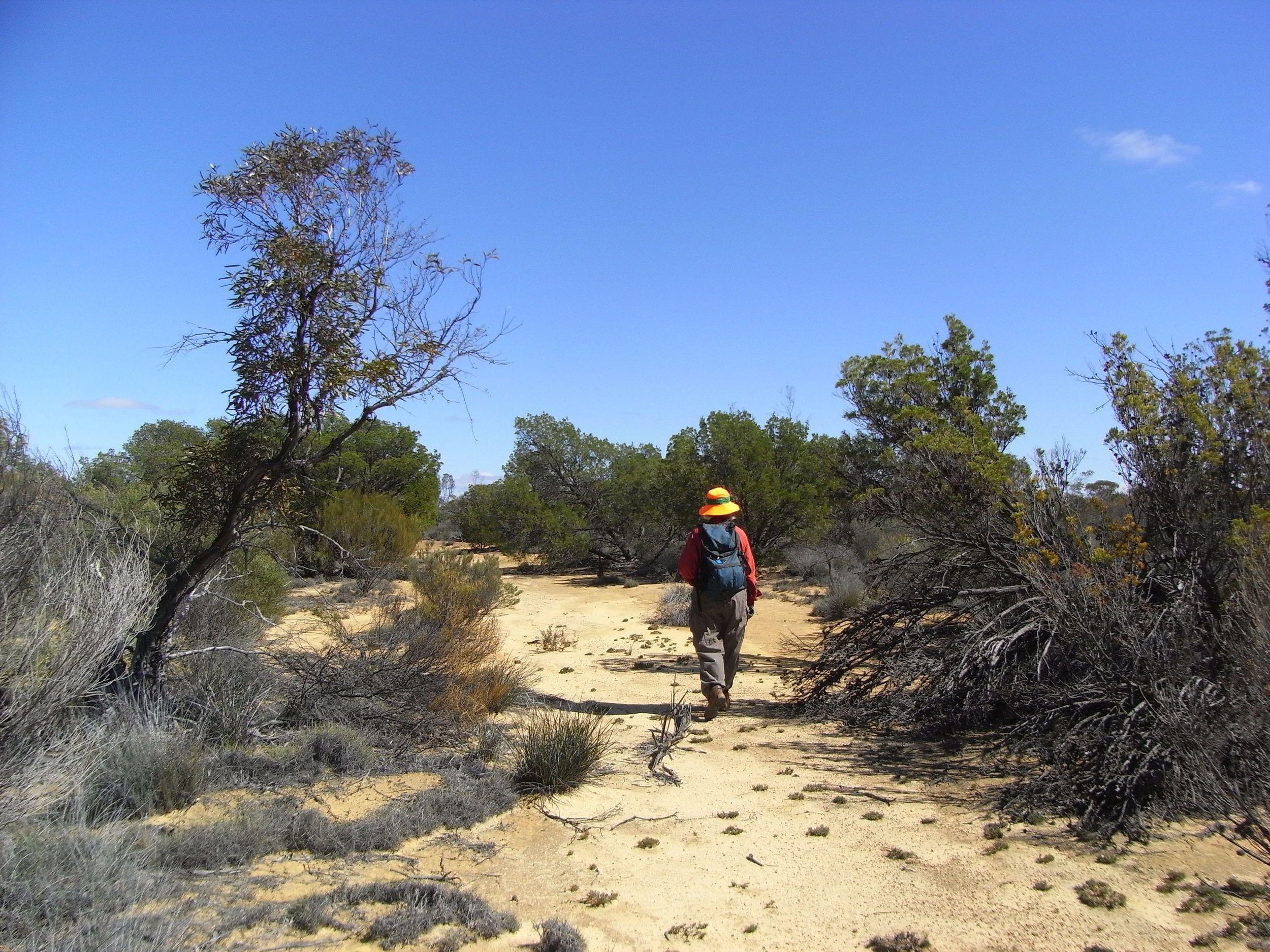 walking Hunt's Track