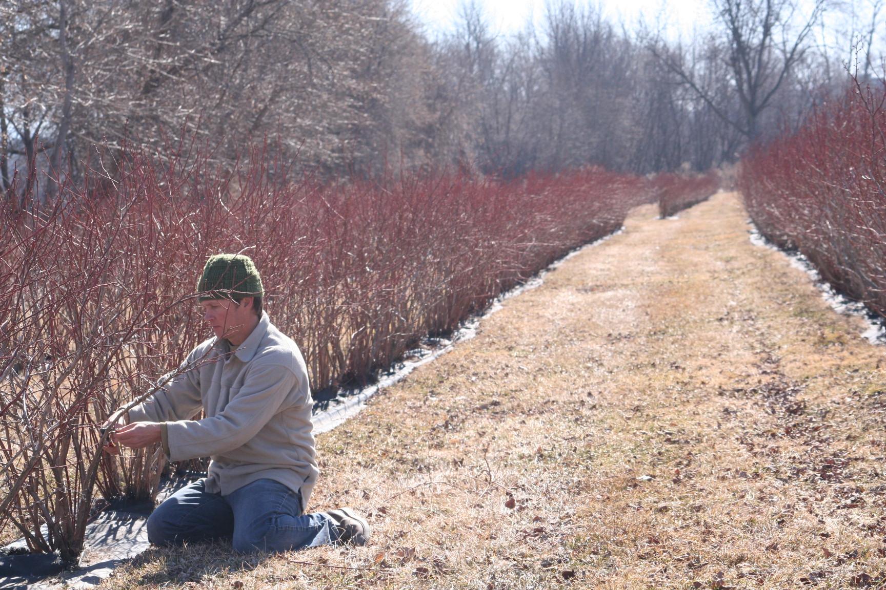 adam pruning.jpg