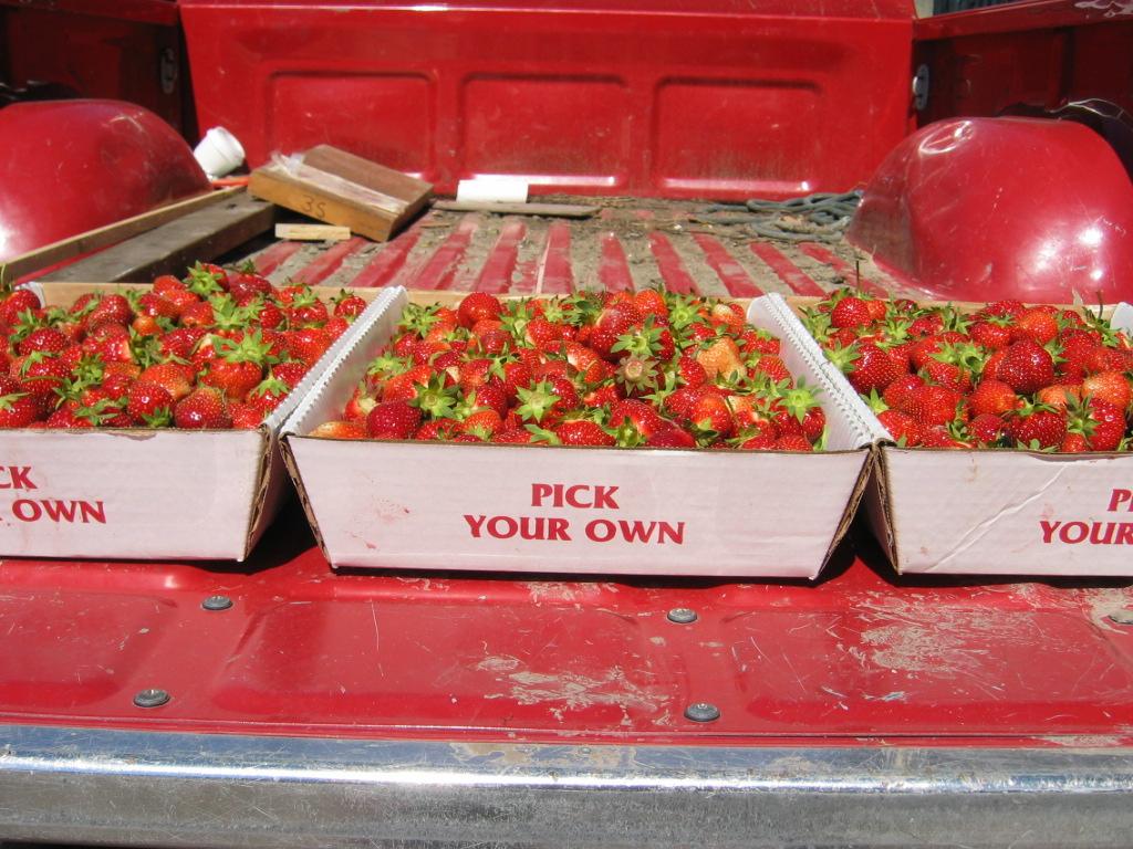 strawberries on truck.jpg