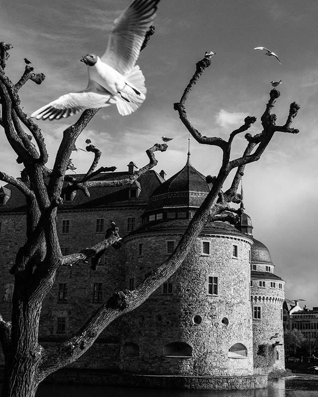Örebro Slott. #örebro #blackandwhite #örebroslott #sverige #iphonex #latergram #seagull