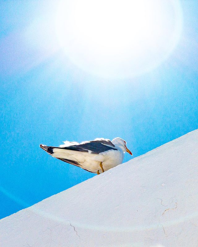A seagull. #seagull #sun #white #blue #Menorca #Spain #SomParcBeach