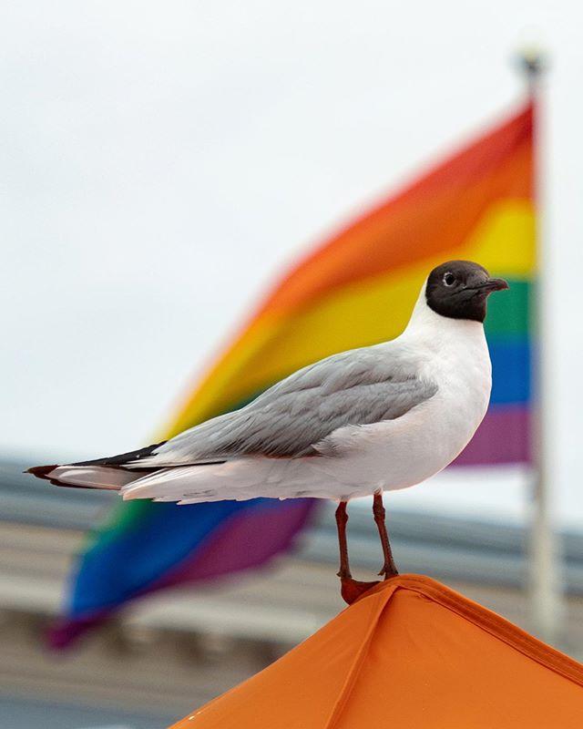 Seagull. #seagull #helsinki #olympus #mc20 #teleconverter