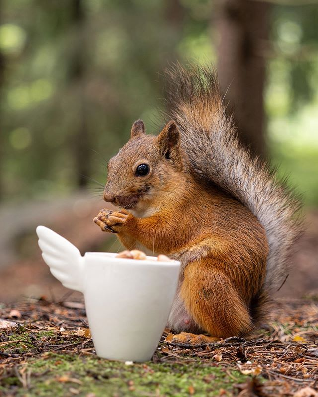 Made commercial photos for @samirinnedesign yesterday. #ceramics #squirrel #olympus