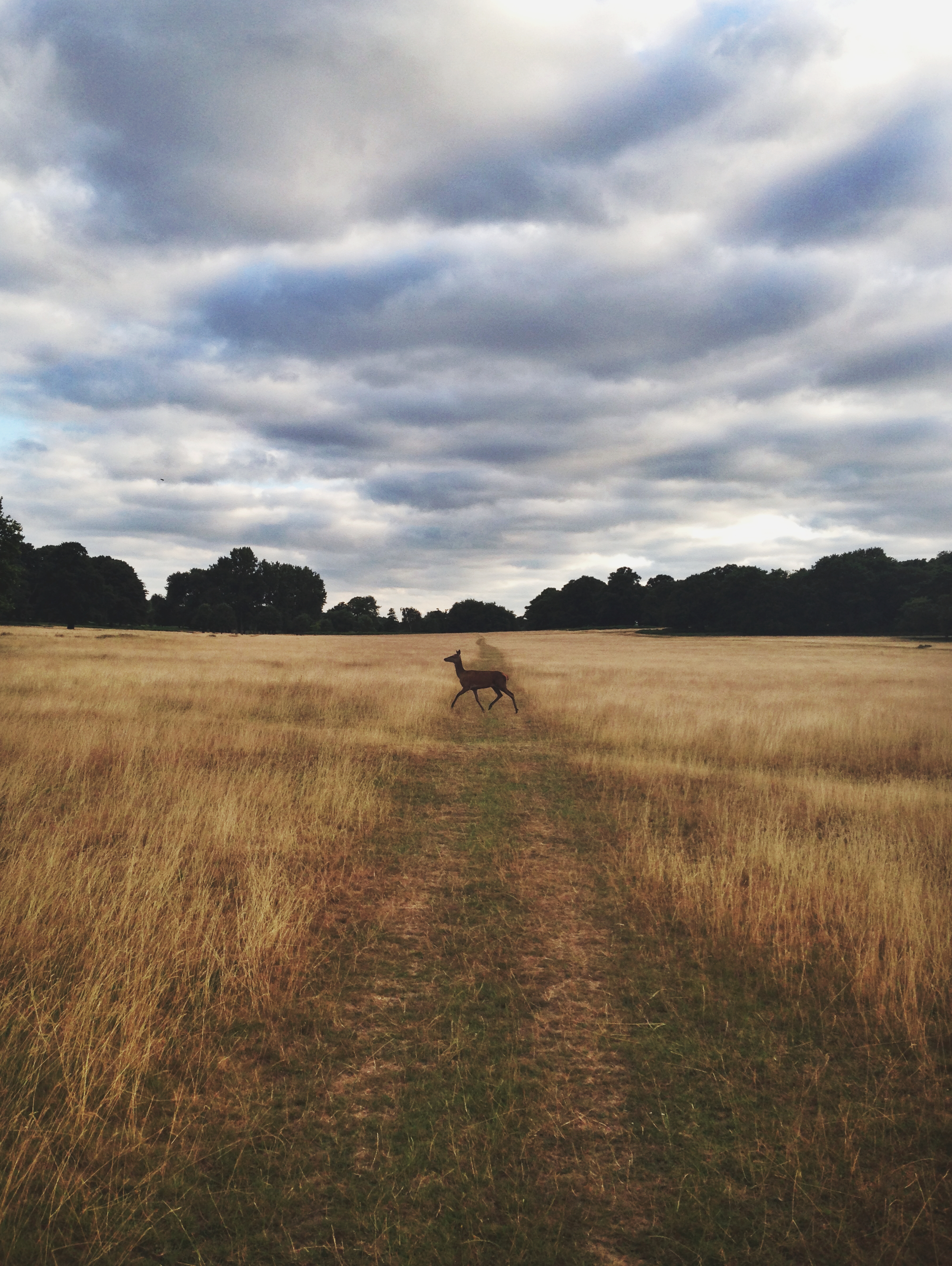 Richmond Park, United Kingdom -