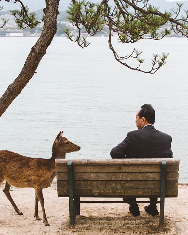 Deer and Salary Man.  Miyajima, Japan.
