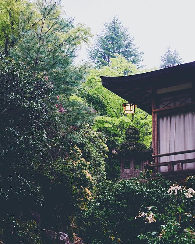 Forest Hideout.  Miyajima, Japan.