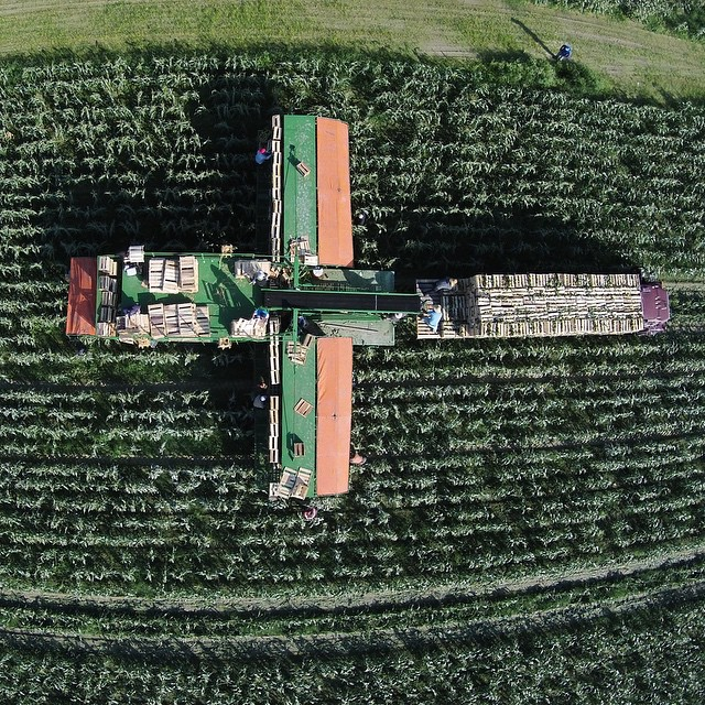 A nice aerial view of the mule train. It's a beautiful day to pick some corn! #sweetcorn #farm #florida #floridafarm #wintercorn #floridaagriculture #agriculture #aglife #ag4life #southorida #usa #americanagriculture @agriculture_worldwide