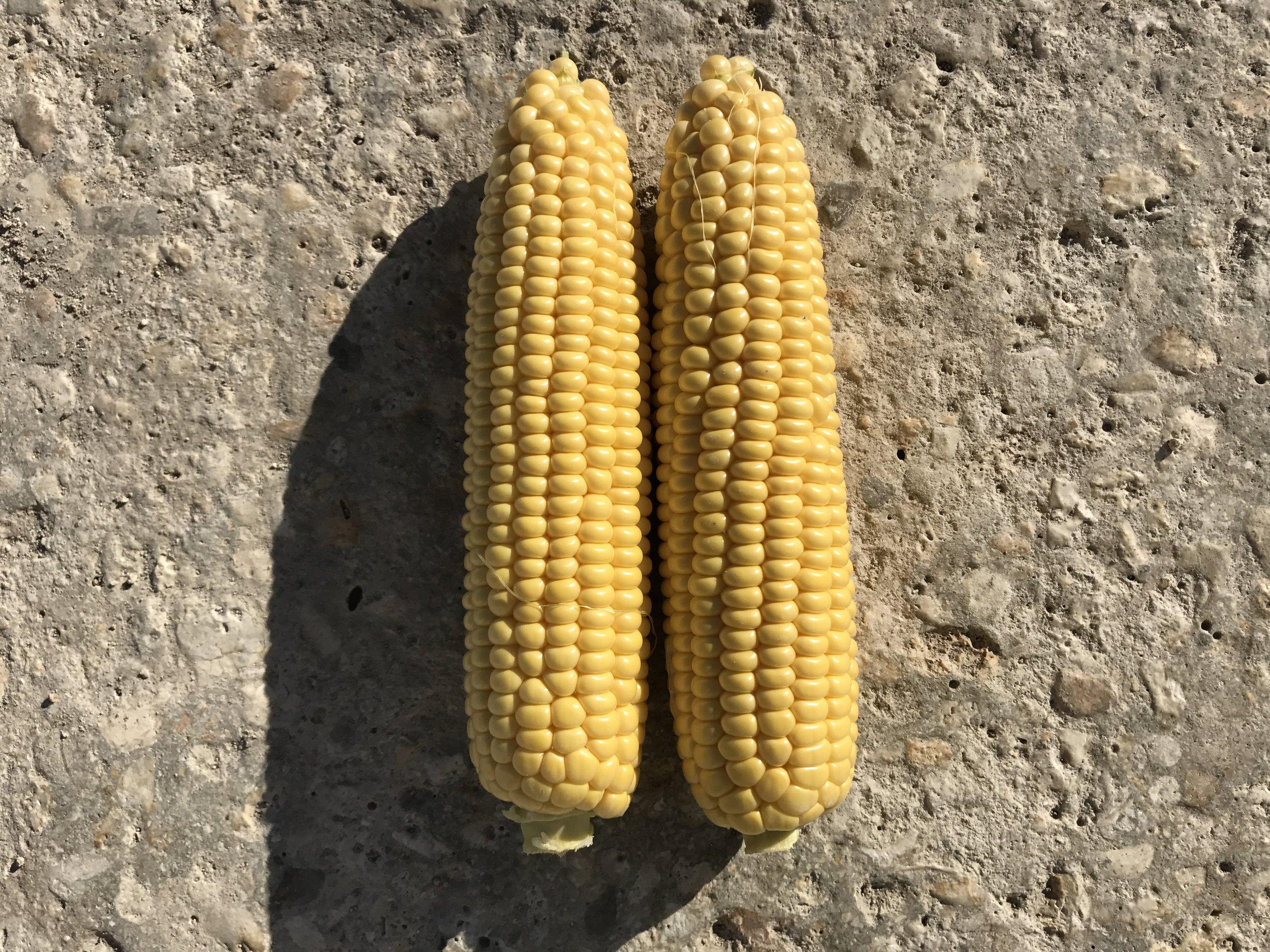 Fresh Yellow Sweet Corn Winter Produce