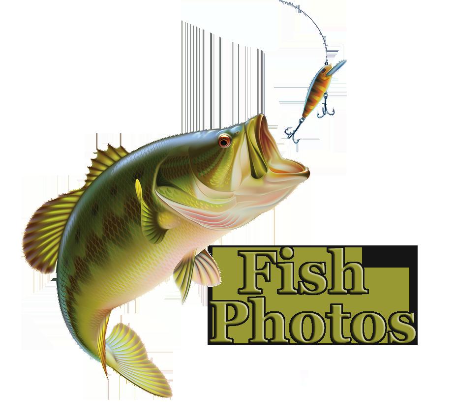 fish-photos.png